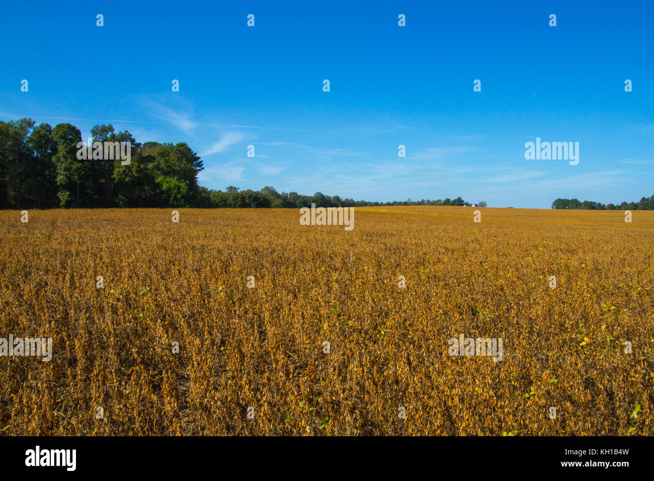 Country living - Stock Image
