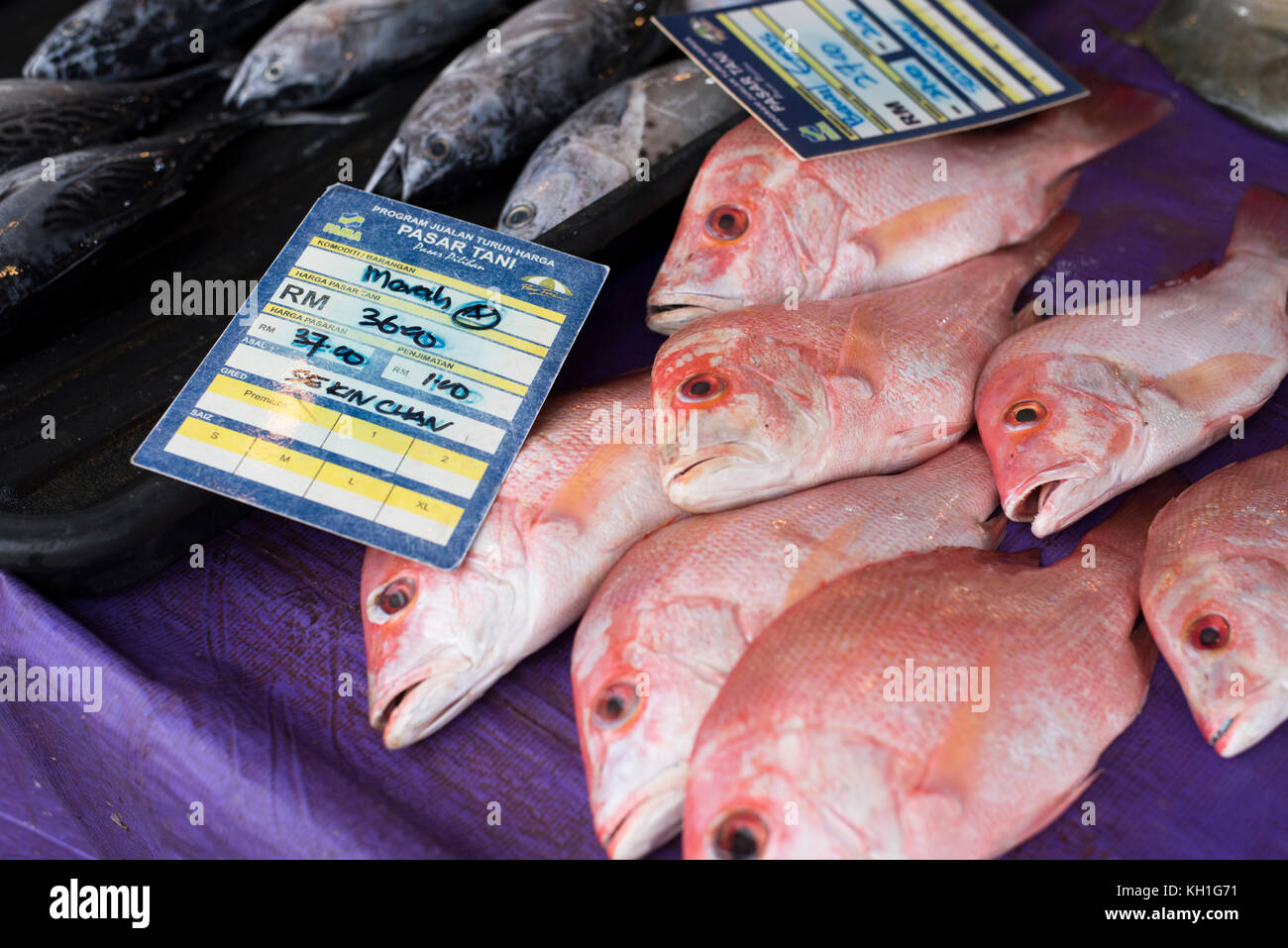 Kelana Jaya,Petaling Jaya,Selangor,Malaysia-11th November 2017 ; pile of a red snapper fish with price tag for sale Stock Photo