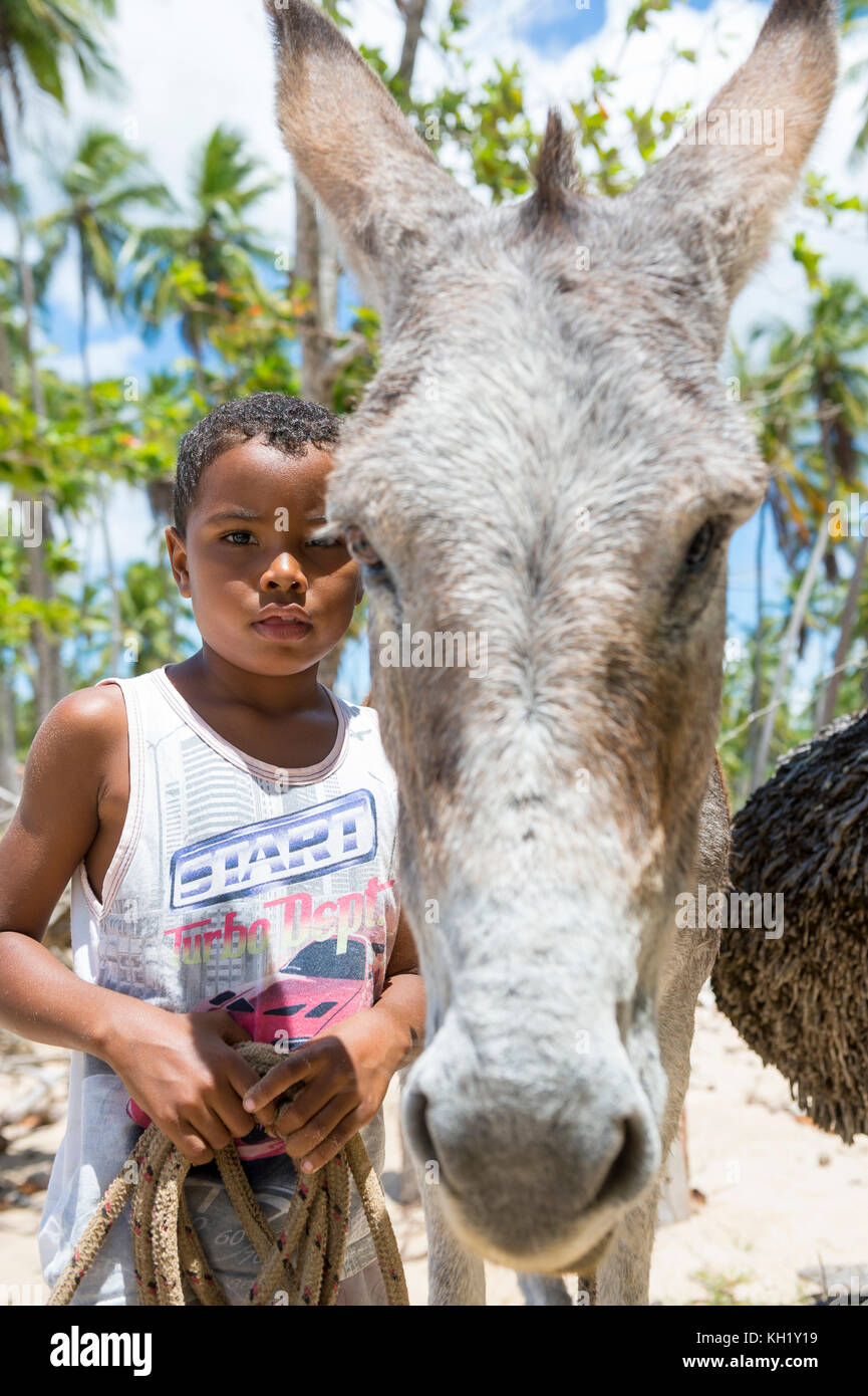 BAHIA, BRAZIL - MARCH 11, 2017: A mule stands with a young boy on the palm fringed shore of a northeastern brazilian - Stock Image
