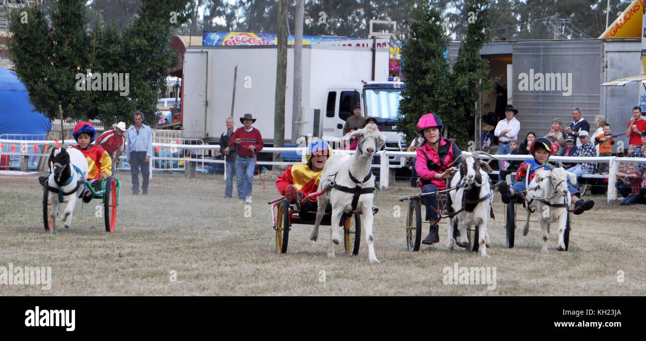 GOAT RACING AT COUNTRY SHOW - Stock Image