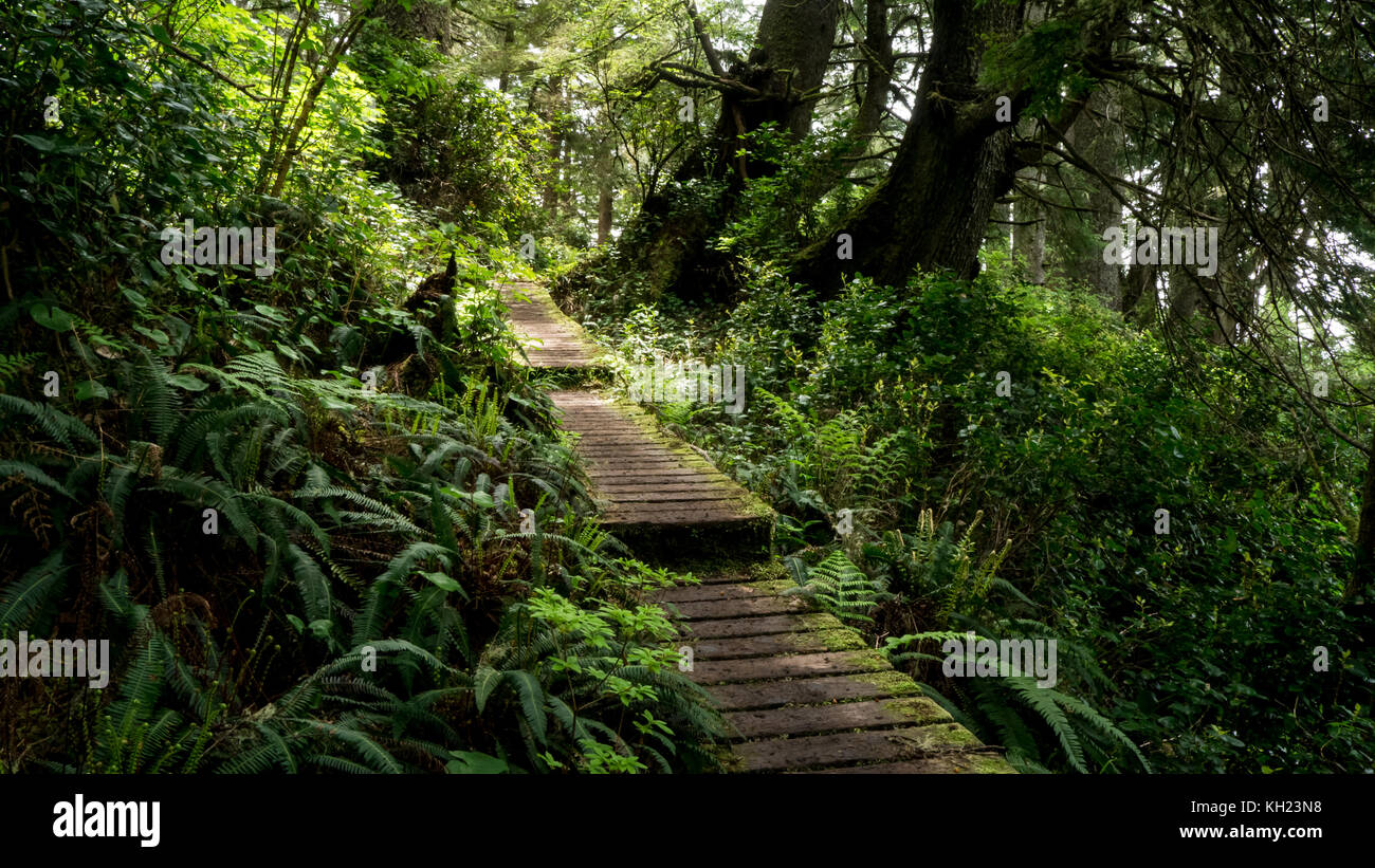 A boardwalk in good condition going through ferns an coastal forest (West Coast Trail, Vancouver Island, BC, Canada) - Stock Image
