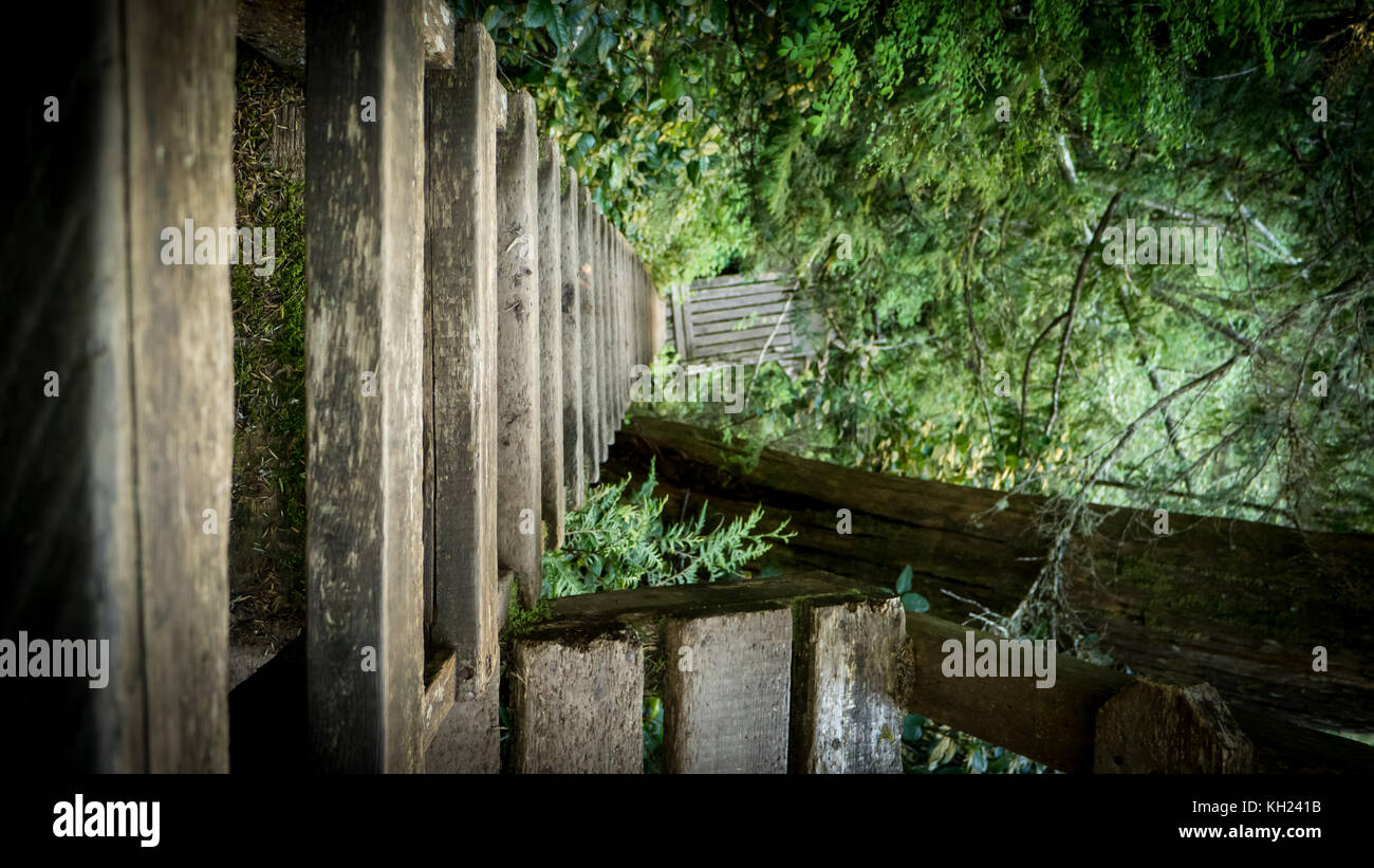 One of the many often steep ladders that can be found along the trail (West Coast Trail, Vancouver Island, BC, Canada) Stock Photo