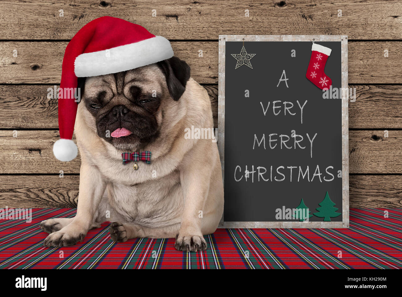 grumpy pug puppy dog with red santa hat sitting next to blackboard sign with text very merry Christmas, on wooden - Stock Image