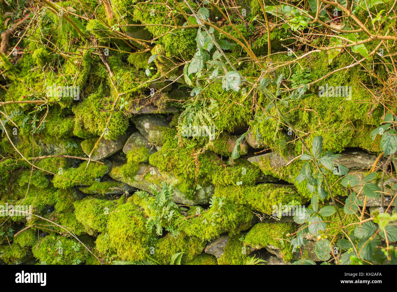 stone fence with green moss and leafs - Stock Image