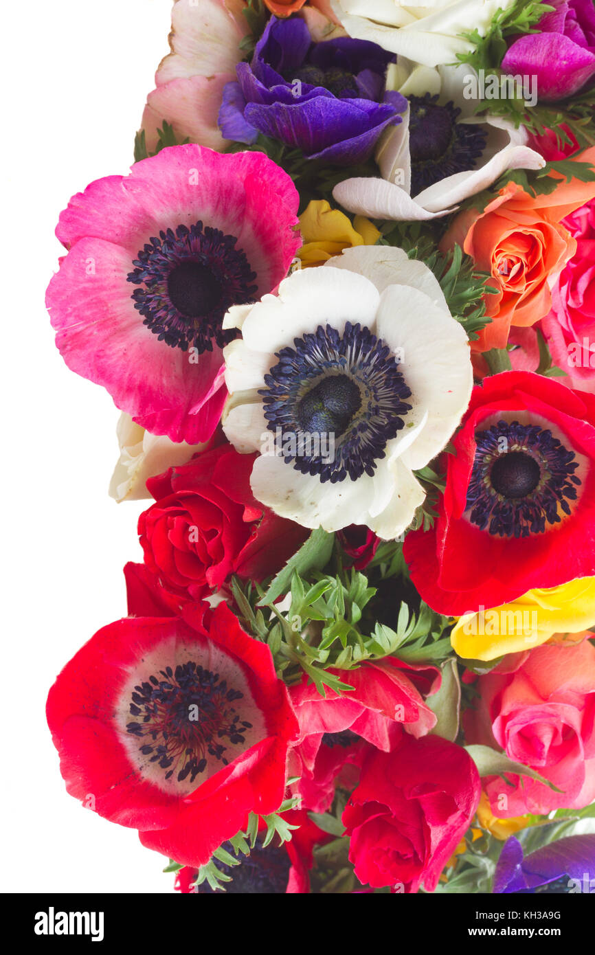 Fresh Anemones And Roses Flowers Border Isolated Over White Stock