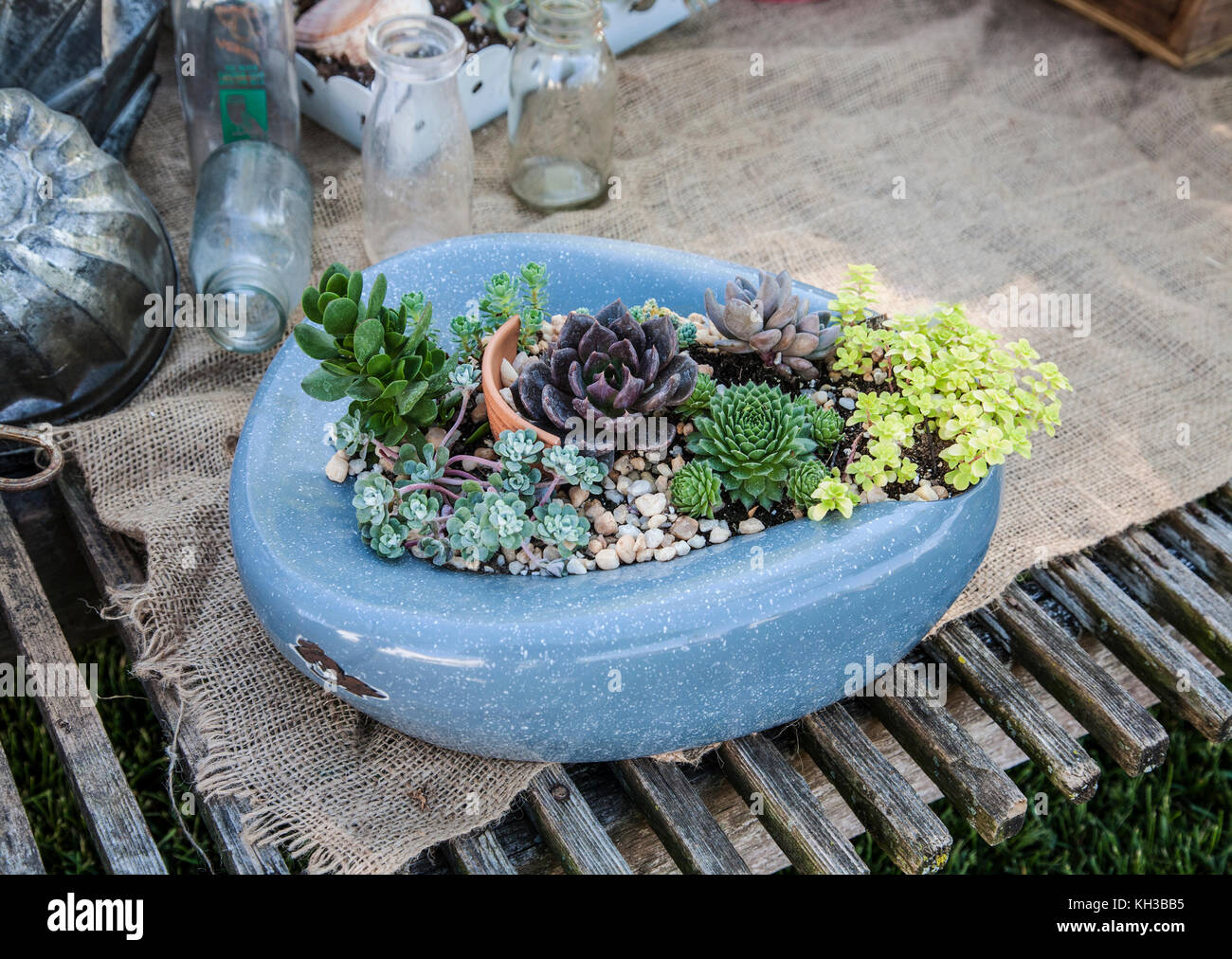 Repurposed garden humour planter pot bedpan, toilet with succulents on an Amish farm, Lanncaster County, Pennsylvania, - Stock Image