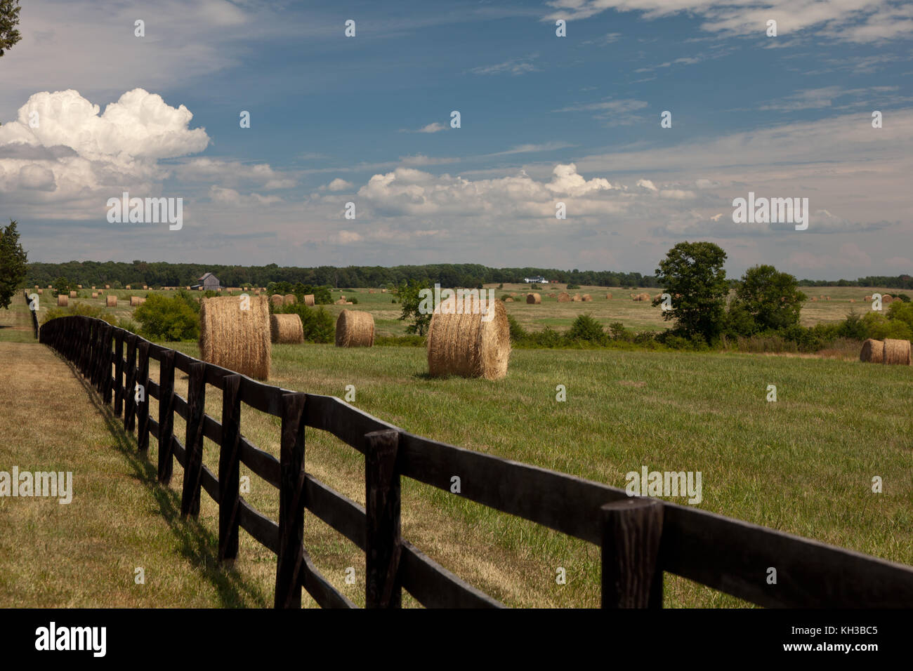 Hay bales in a field of green with blue skies - Stock Image