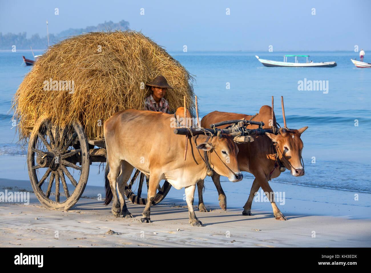Ox-drawn cart on Ngapali Beach in Rakhine State in Myanmar (Burma). - Stock Image
