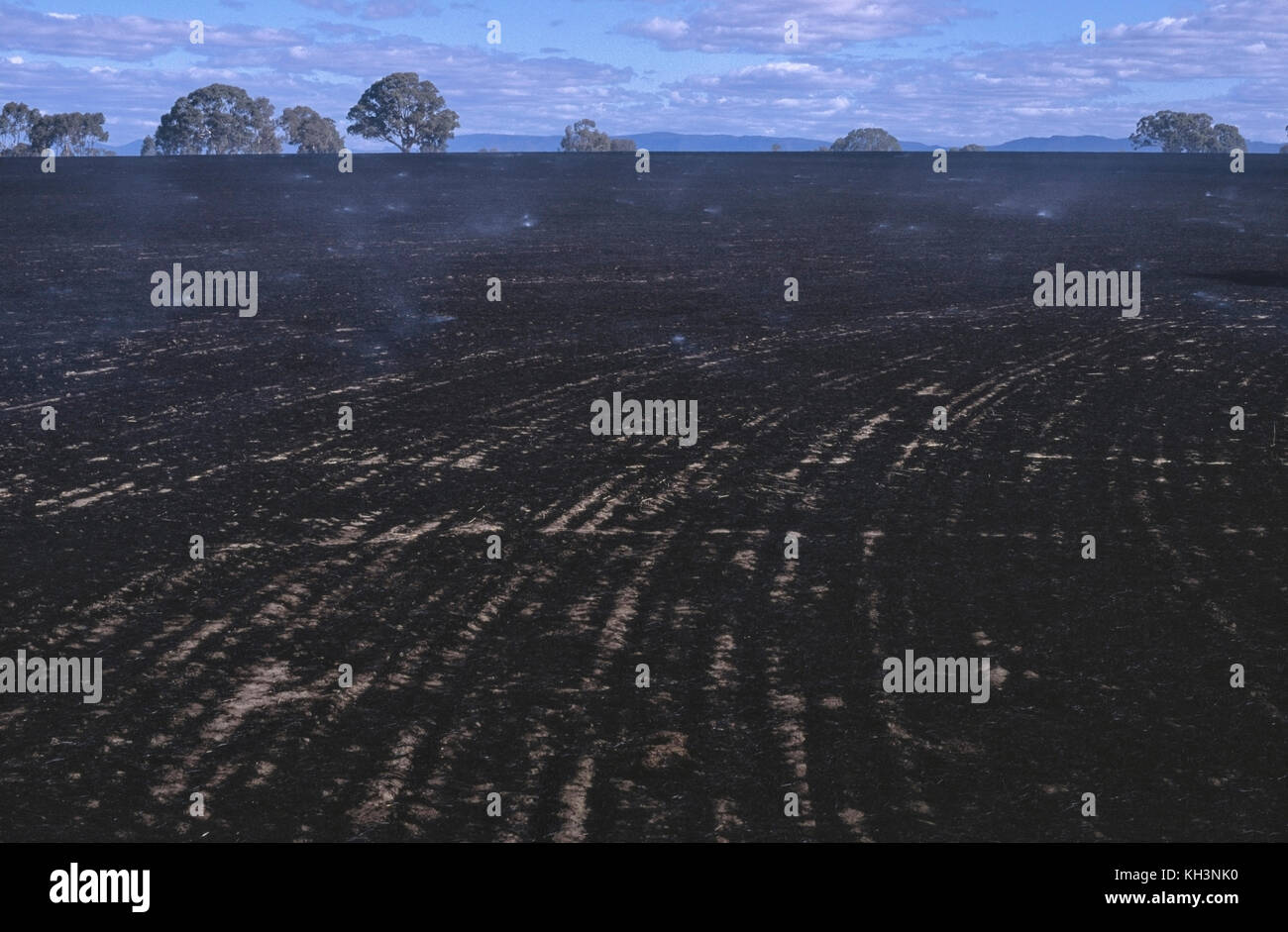Stubble burn aftermath -  blackened burnt ground - Stock Image