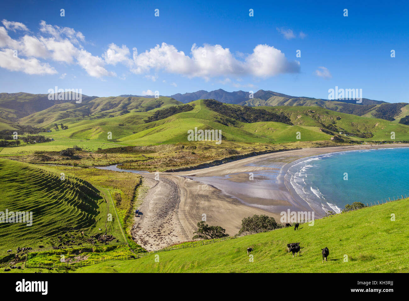The rolling green hills of the Coromandel Peninsula at Port Jackson, New Zealand. - Stock Image