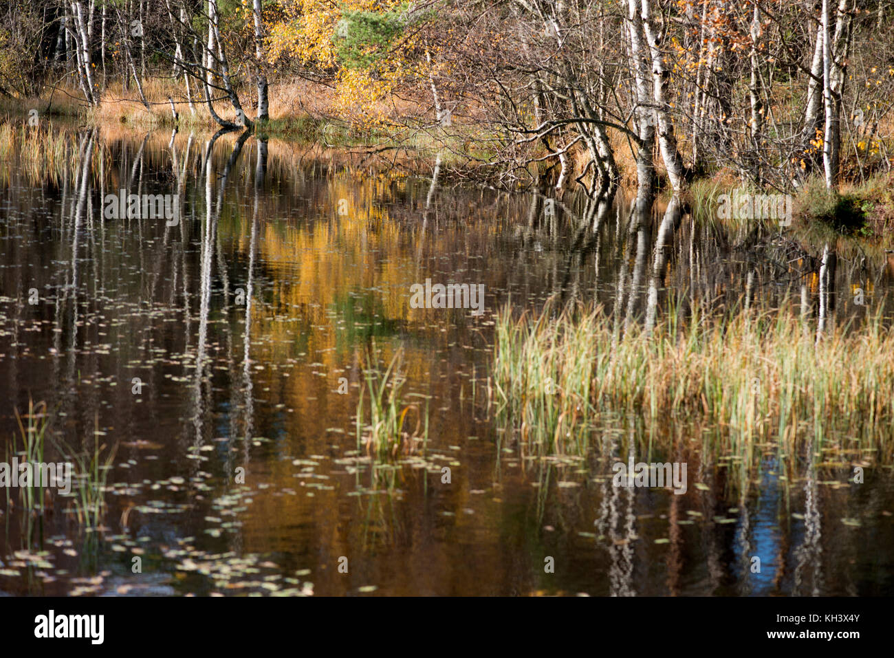 Plants and nature in Sweden Stock Photo