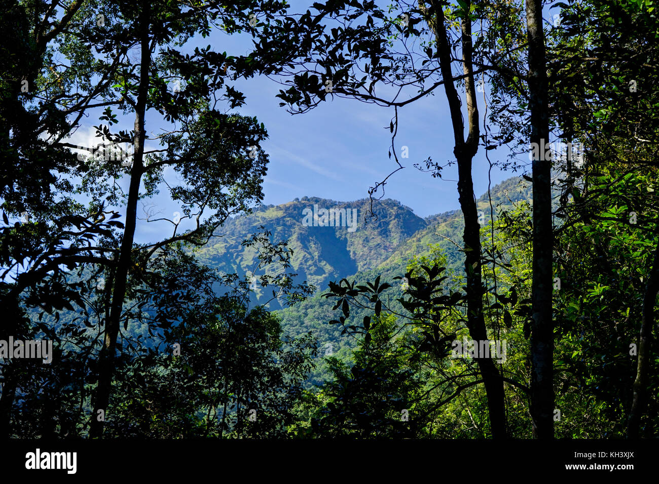 View towards mountain through trees Mount Rinjani Indonesia - Stock Image