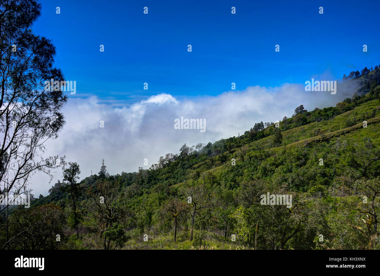 View over clouds from Mountain blue sky Mount Rinjani Lombok Ind - Stock Image