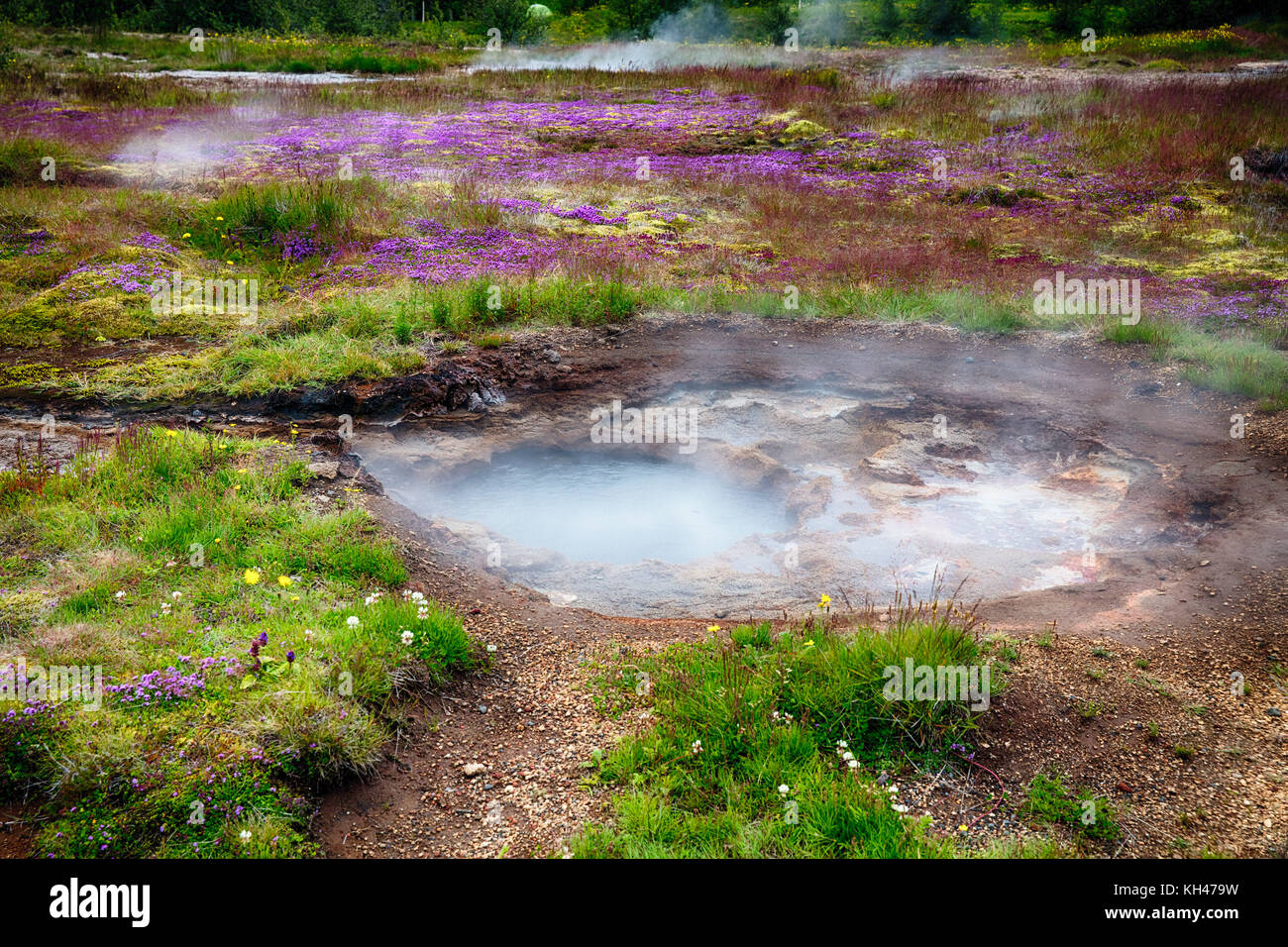 Close Up View of a Meadow with Steaming Hot Springs, Haukadalur Valley, Southern Iceland Stock Photo