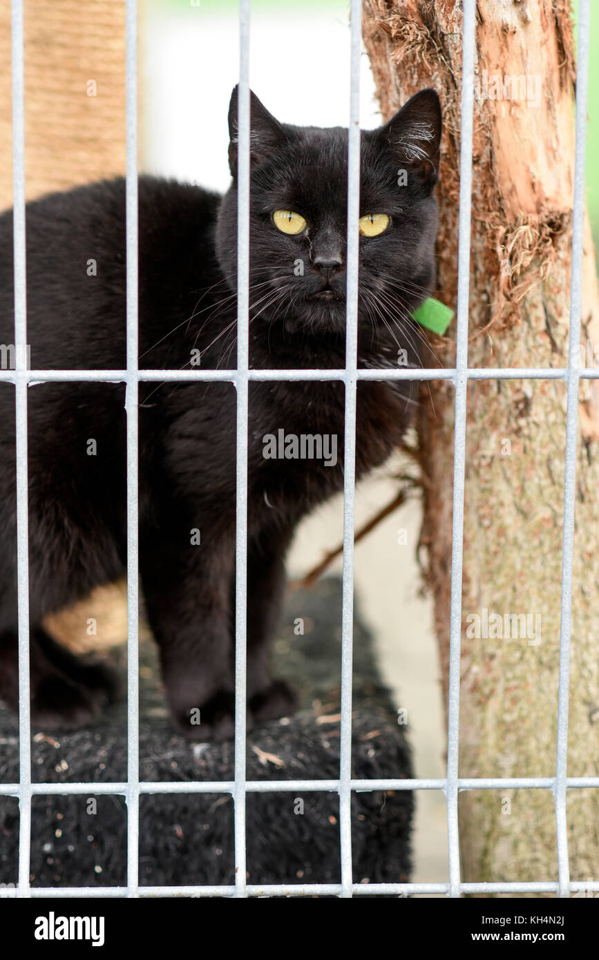 Choszczno, Poland, 12 november 2017: A cat behind bars in a shelter for homeless animals. - Stock Image