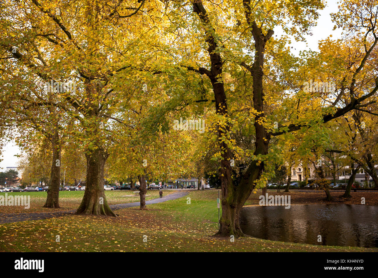 Europa, Germany, Cologne, park at the Theodor-Heuss-Ring near the square Ebertplatz.  Europe, Deutschland, Koeln, - Stock Image