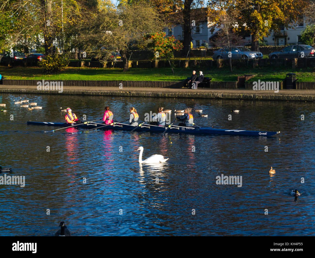 Coxed four female rowers training on River Avon Evesham Worcestershire England UK - Stock Image