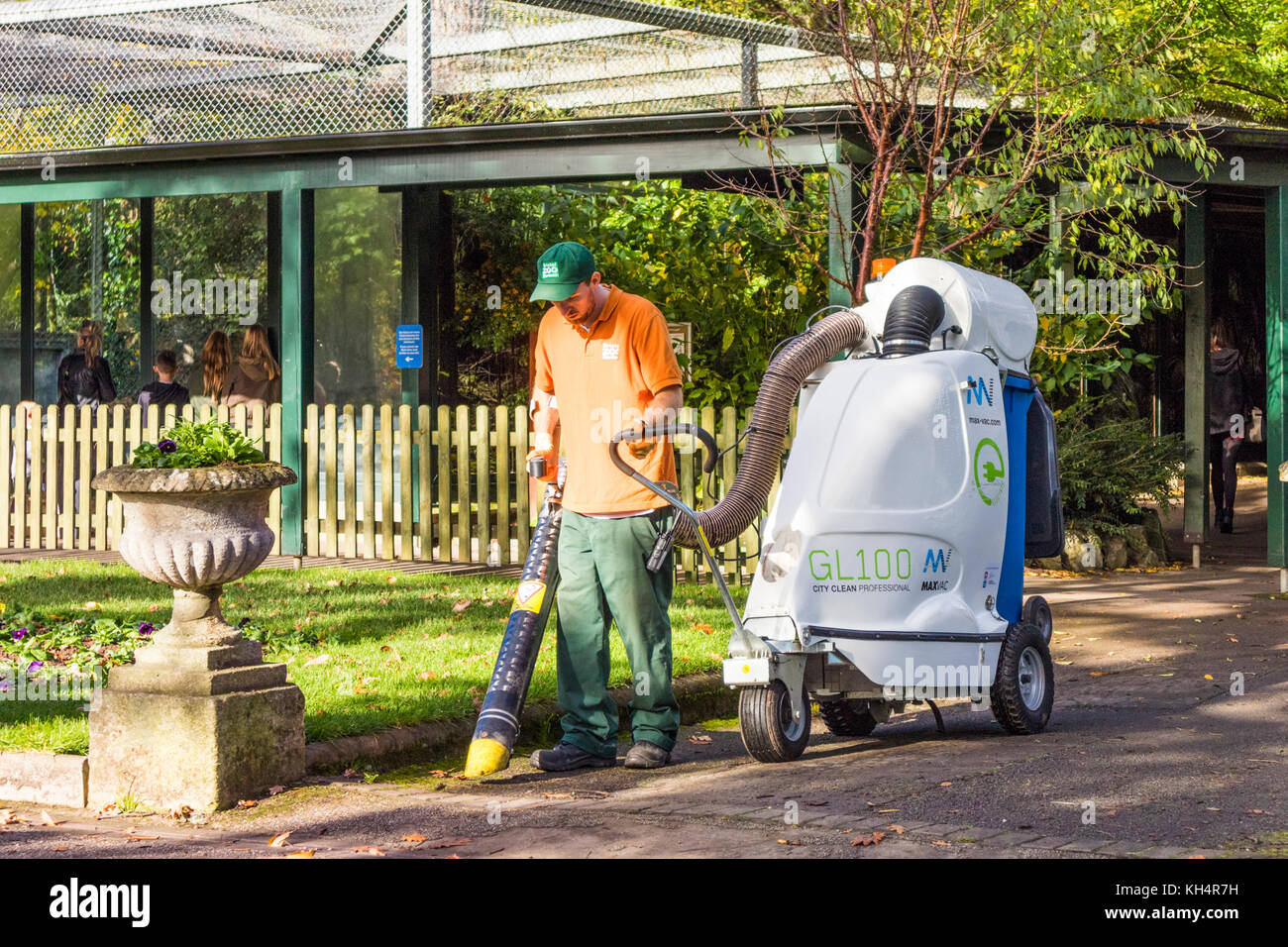 Vacuuming up autumn leaves at Bristol Zoo, Bristol UK - Stock Image