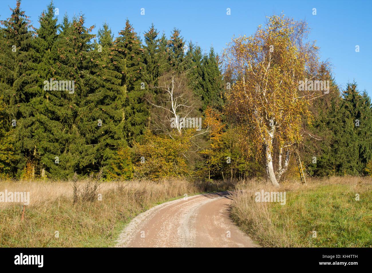 herbstlicher Waldweg mit Wiese - Stock Image