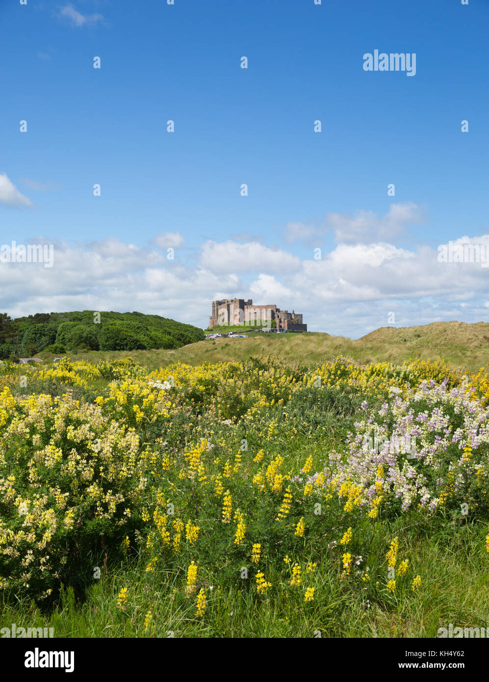 Bamburgh Castle Northumberland north east England UK medieval fortress in summer - Stock Image