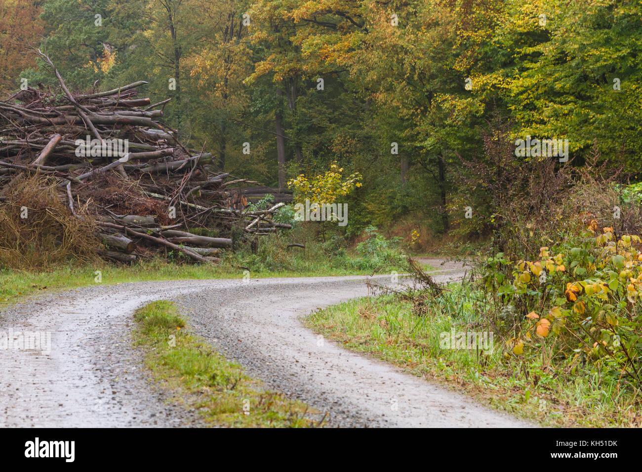 Forstwirtschaft Waldweg mit Holz Stock Photo
