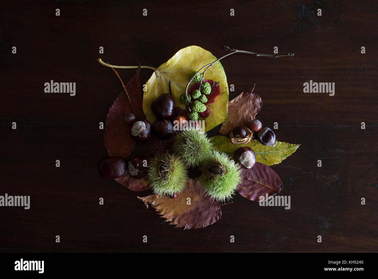 beautiful autumnal still life with leaves, chestnuts and berries, on rustic dark wooden background - Stock Image