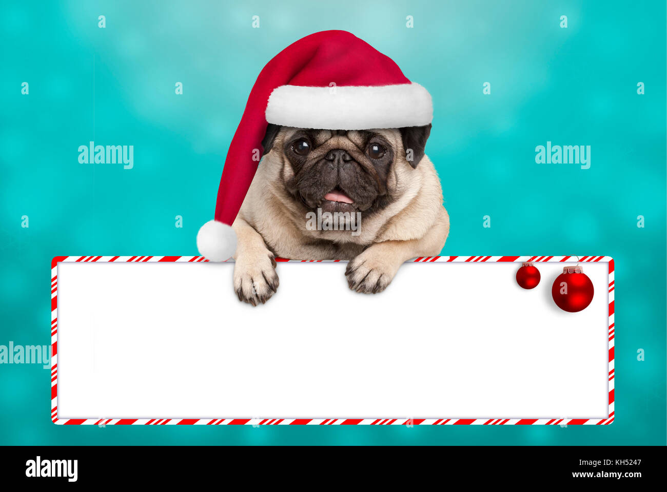 d1ce01fc8b4 cute smiling Christmas pug puppy dog with santa hat