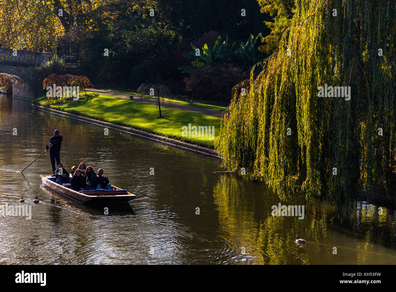 Punting on river Cam next to a weeping willow tree in the 'Backs', Cambridge, Cambridgeshire, England, UK. - Stock Image