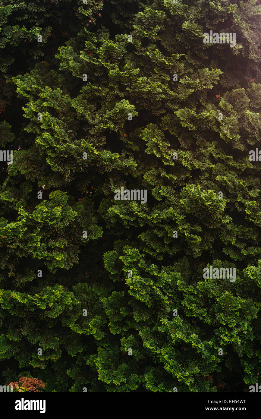 Creative layout made of green leaves. Flat lay. Nature Stock Photo