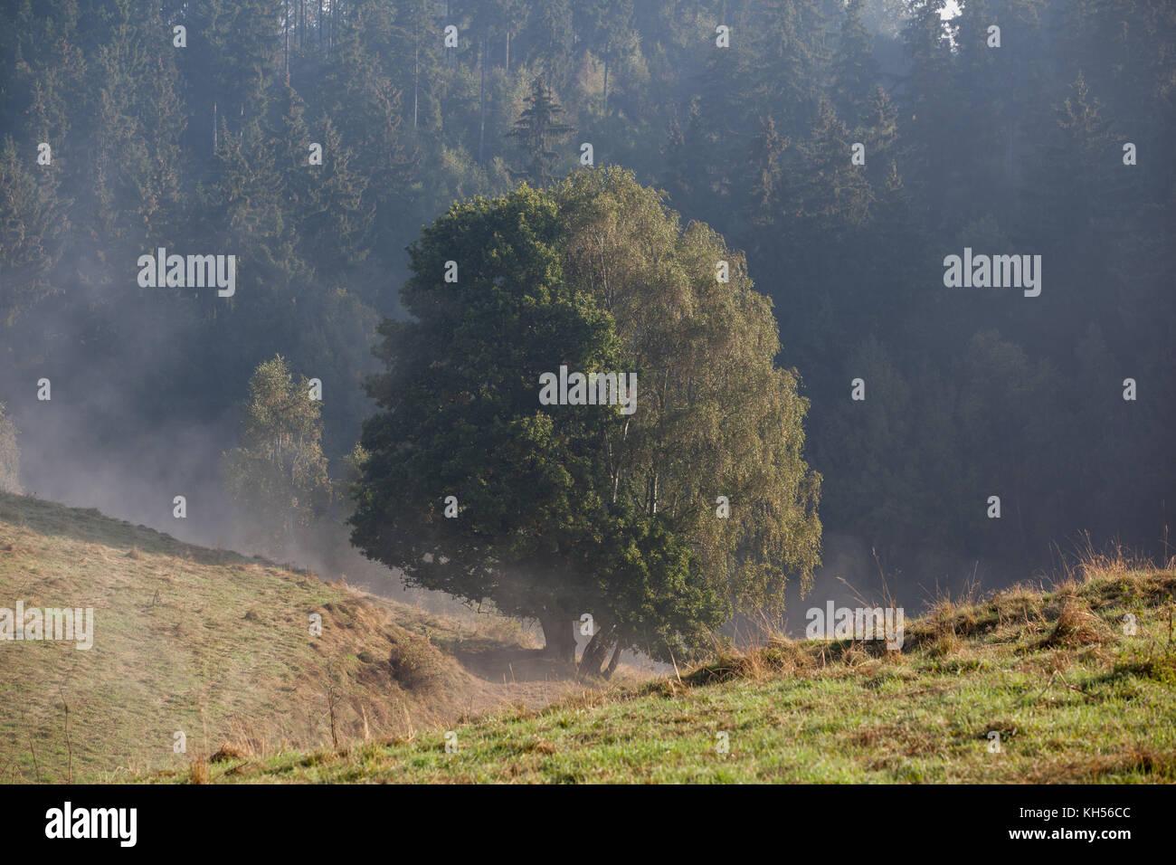 einzelner Baum mit Nebel - Stock Image