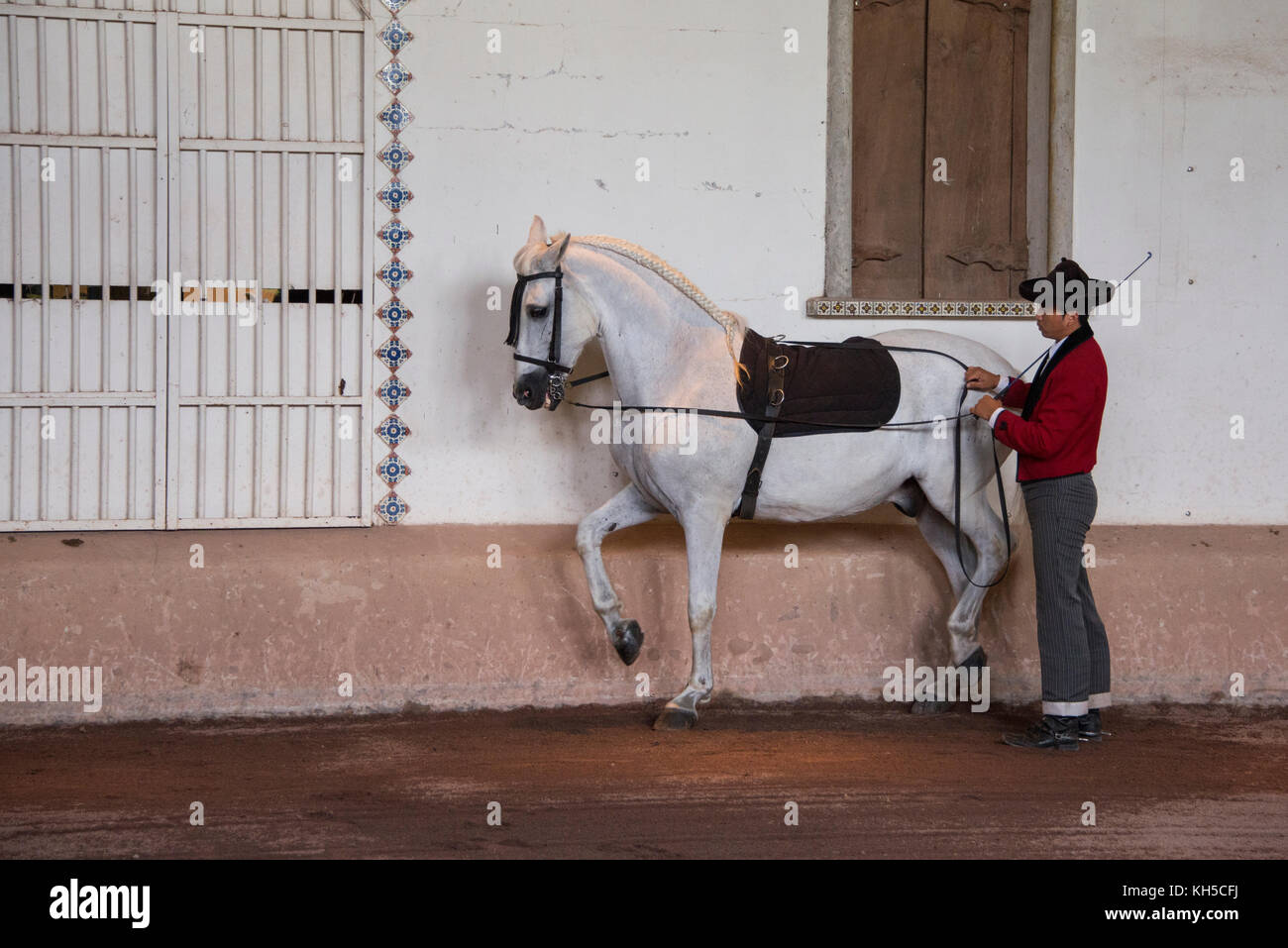 Central America, Costa Rica, Alajuela Province, Rancho San Miguel. Traditional Andalusian horse show, male trainer - Stock Image