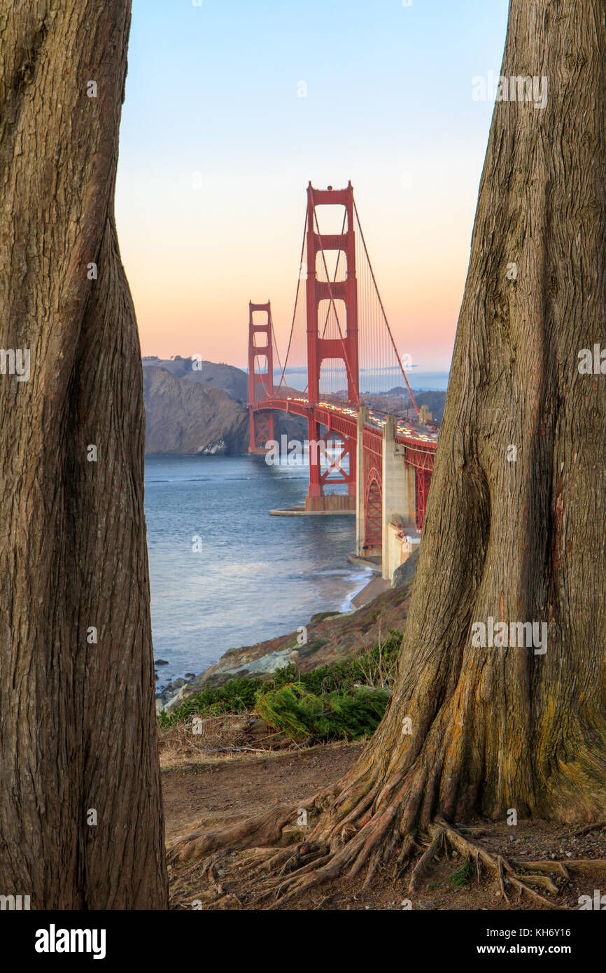 Golden Gate Bridge Through Cypress Trees. - Stock Image