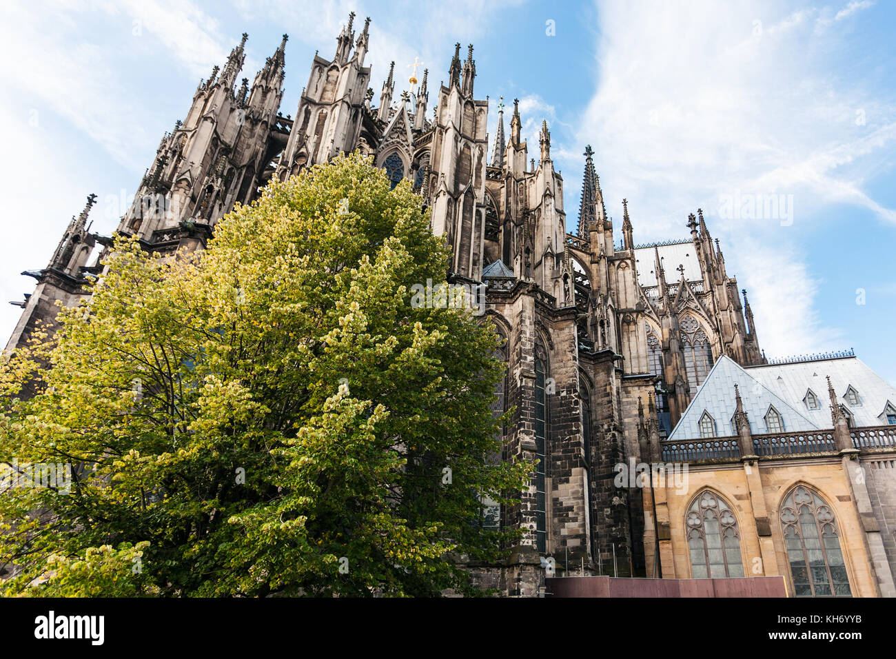 travel to Germany - green tree and Cologne Cathedral (Cathedral Church of Saint Peter) in september - Stock Image