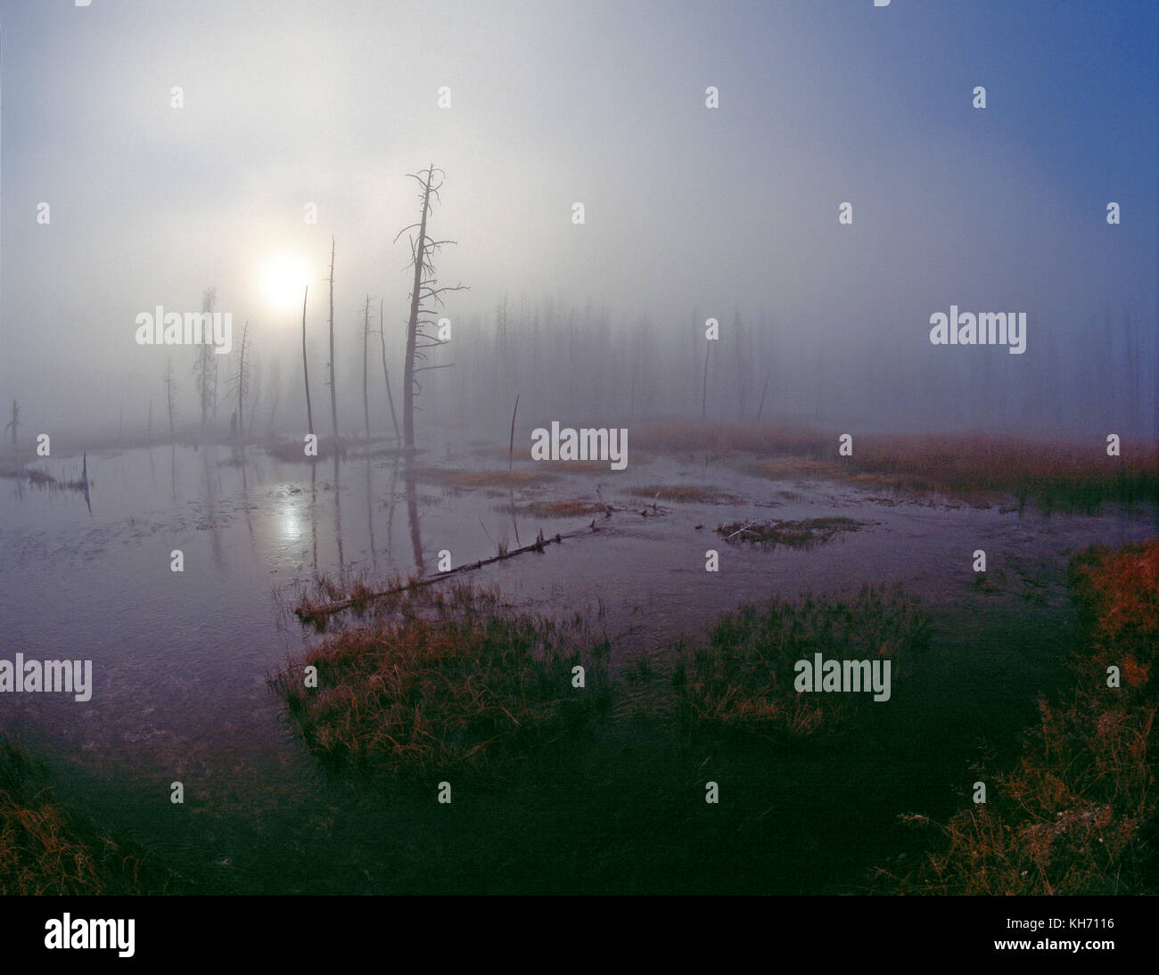 USA. Wyoming. Yellowstone National Park. Lower Geyser Basin. Misty dawn over Tangle Creek. - Stock Image