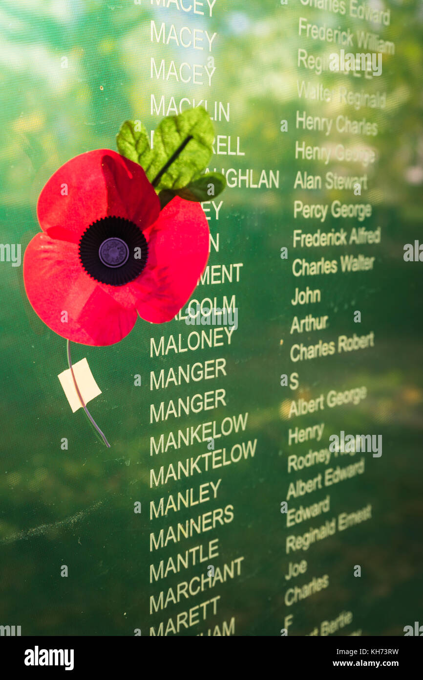 Red poppy next to a display of names of fallen soldiers during Remembrance Day commemorations in Southampton, Hampshire, - Stock Image
