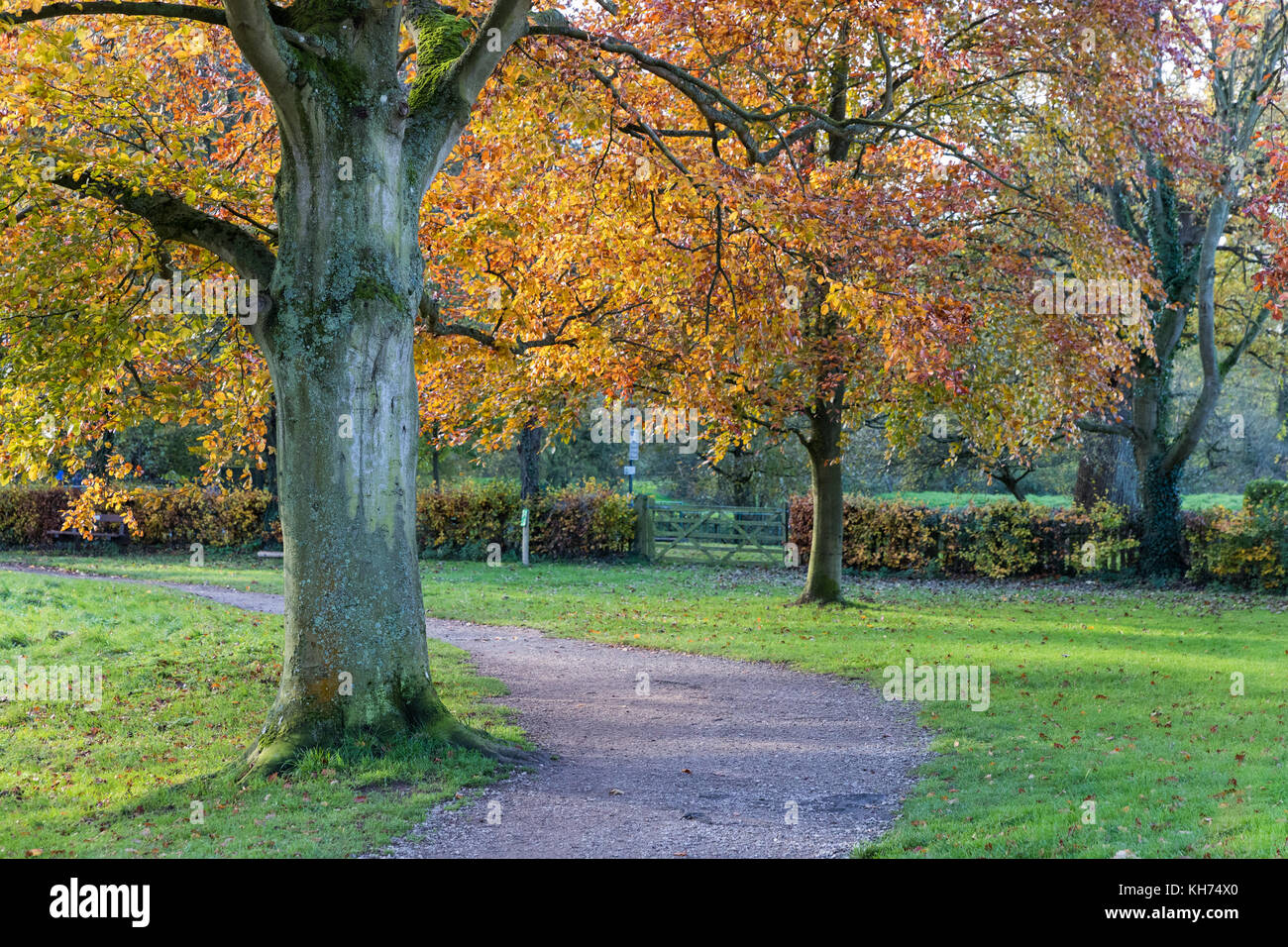 Abbey Fields Kenilworth - Stock Image