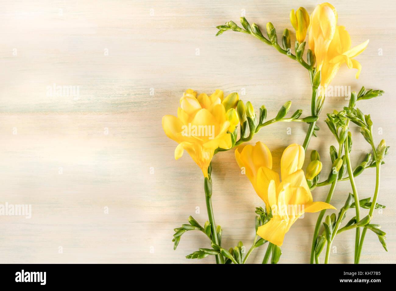 Yellow Freesia Flowers Stock Photos Yellow Freesia Flowers Stock