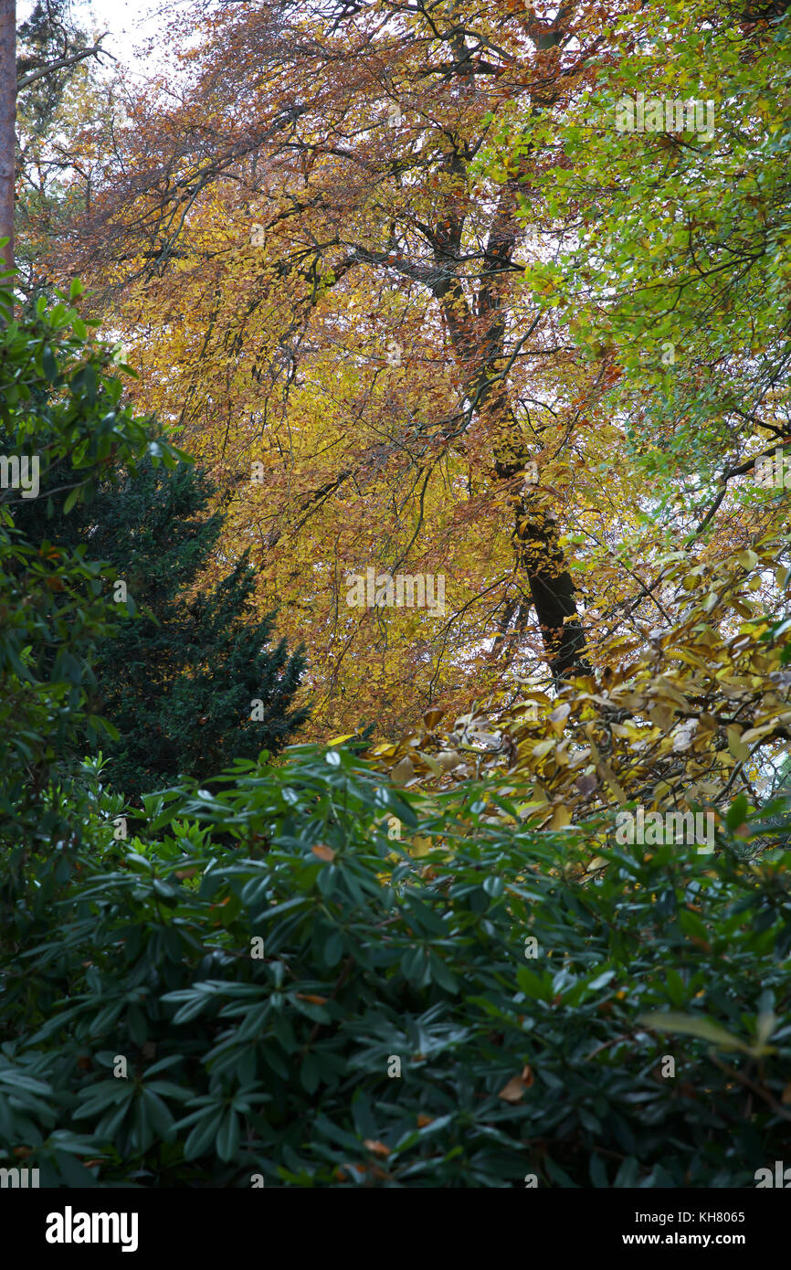 Croydon, UK. 16th Nov, 2017. Golden Autumnal colours in Croydon, Surrey Credit: Keith Larby/Alamy Live News - Stock Image