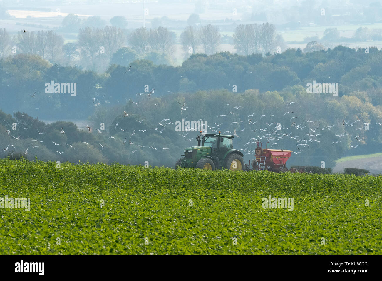 Followed by gulls, green tractor pulling seed drill, working in arable farm field overlooking scenic countryside Stock Photo