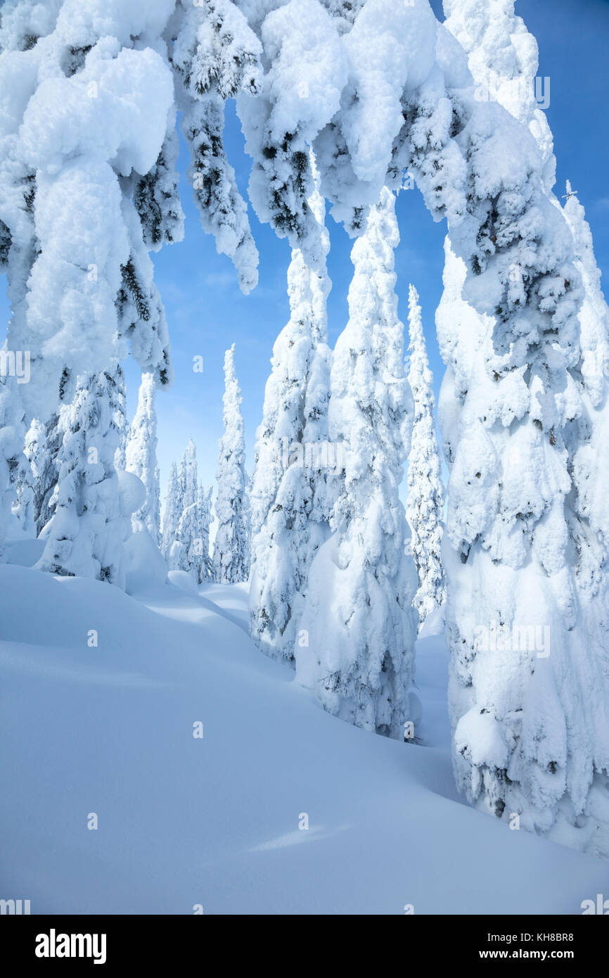 Snow-covered conifers on Silver Star Mountain, British Columbia, Canada - Stock Image