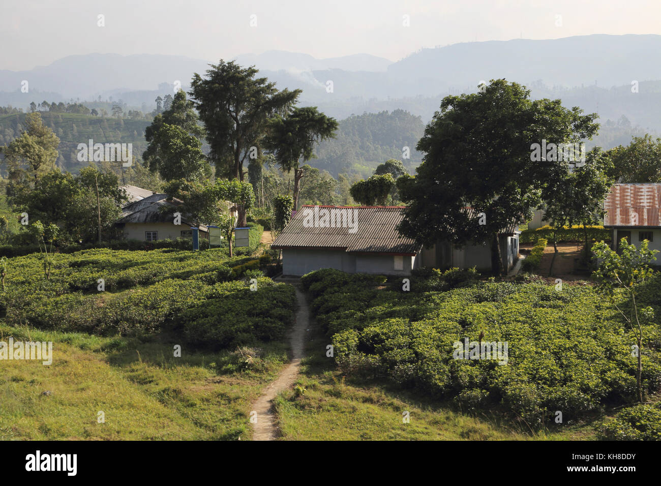 Hill Country Central Province Sri Lanka Tea Pickers Cottages at Tea Plantation - Stock Image