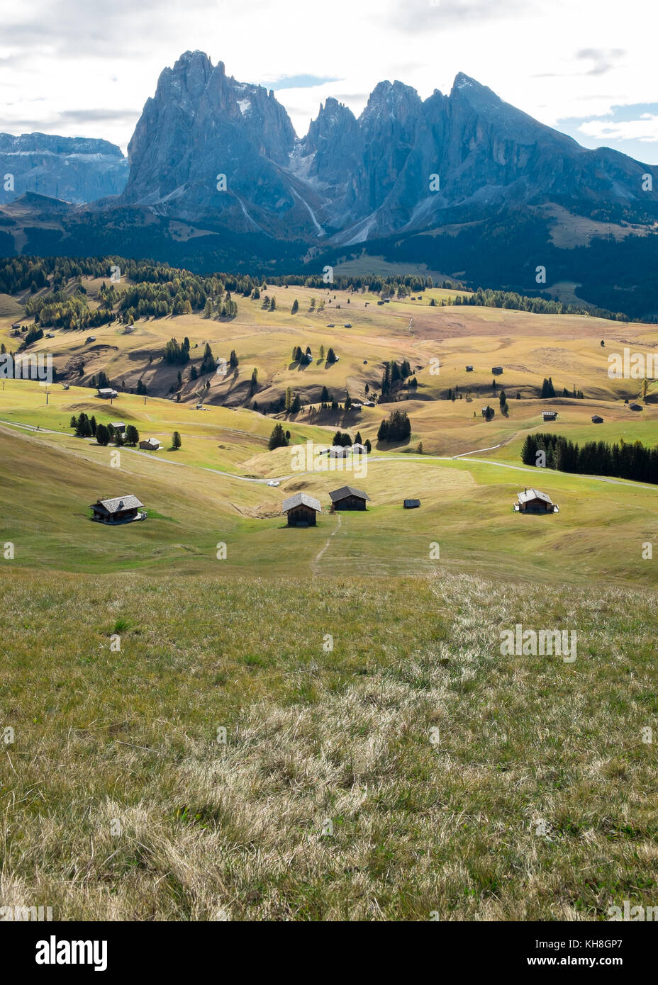 Alpe di Siusi, Dolomites with Leading Line on Grass - Stock Image