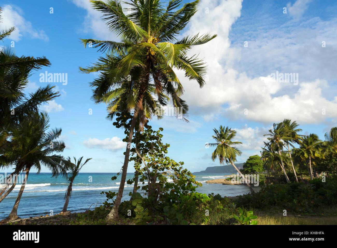 Palmenstrand bei Baracoa, Provinz Guantanamo, Kuba Engl.: Cuba, Provinz Guantanamo, Baracoa, beach, palm trees Stock Photo