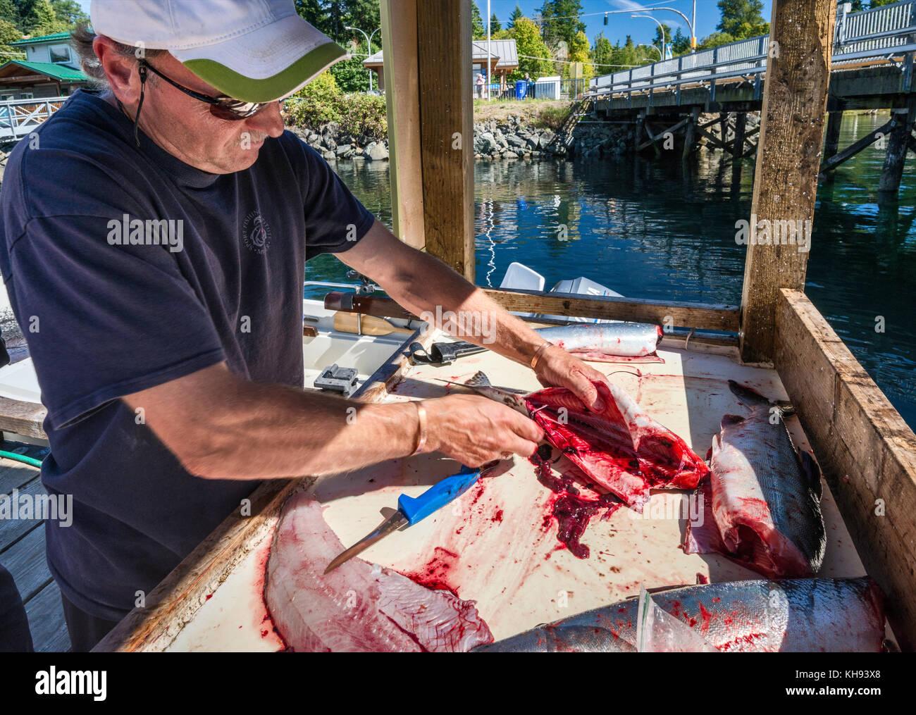 Mature man gutting fish at marina in Quathiaski Cove on Quadra Island, Vancouver Island area, British Columbia, - Stock Image