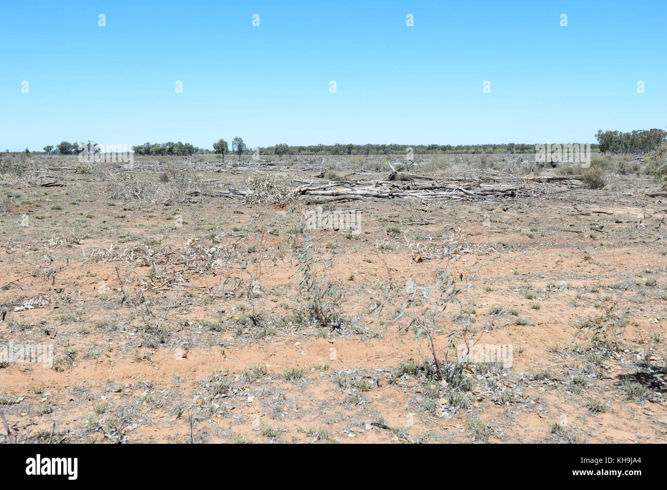 Cleared land for farming undergoing a major drought, South West Queensland, QLD, Australia - Stock Image