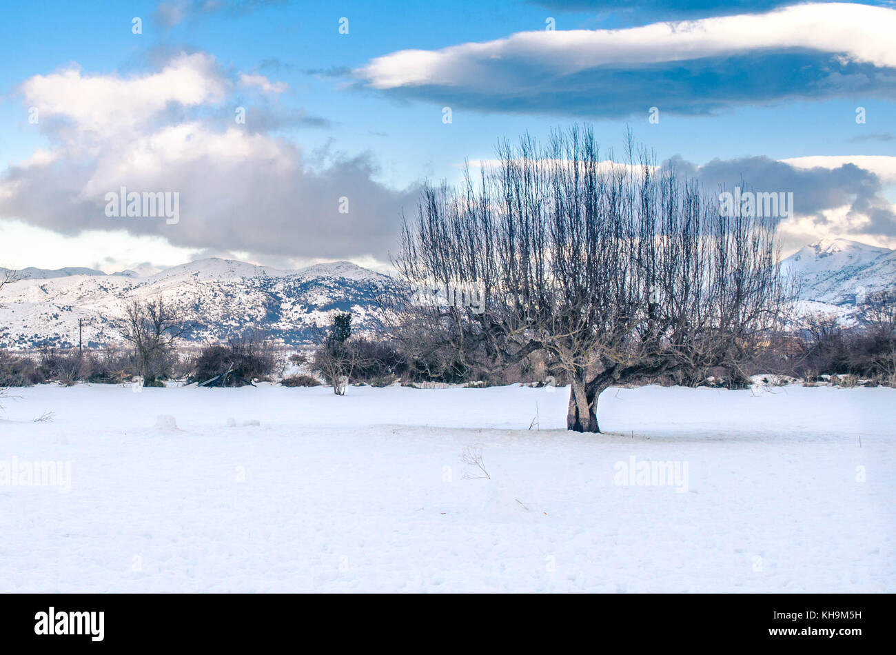 The picturesque Lasithi Plateau covered with snow. A lonely tree composed this amazing scene. Stock Photo