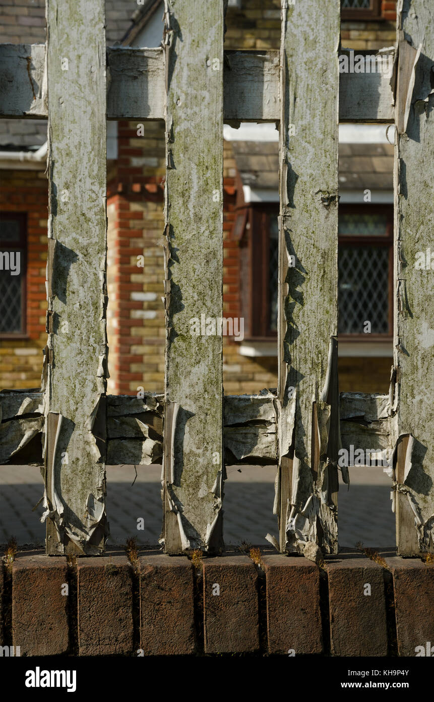 Peeling cracked paint on wooden fence slats which needs desperate attention and redecoration to prevent it decaying - Stock Image