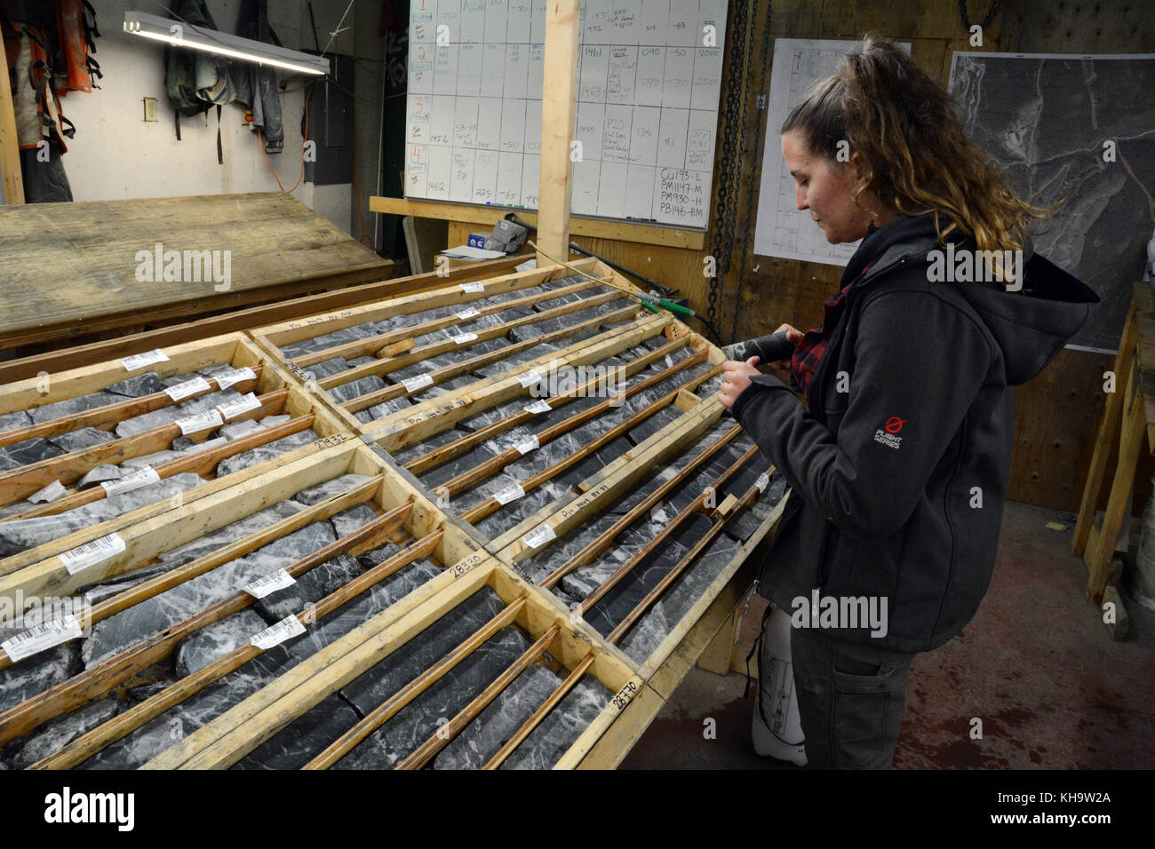 A geologist looking at rock core samples taken by a mining exploration company prospecting for gold, near Stewart, - Stock Image