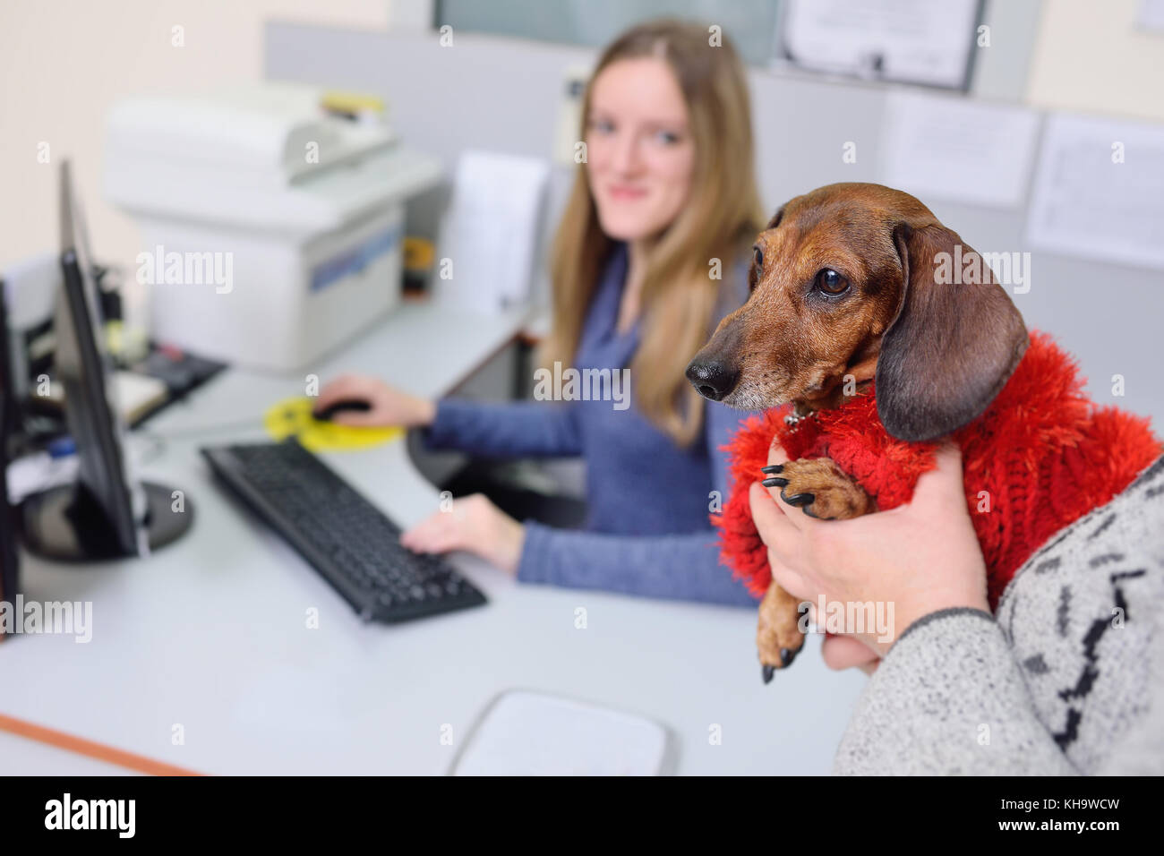 People with their pets are waiting for a medical examination at the veterinary clinic. Animal Health - Stock Image