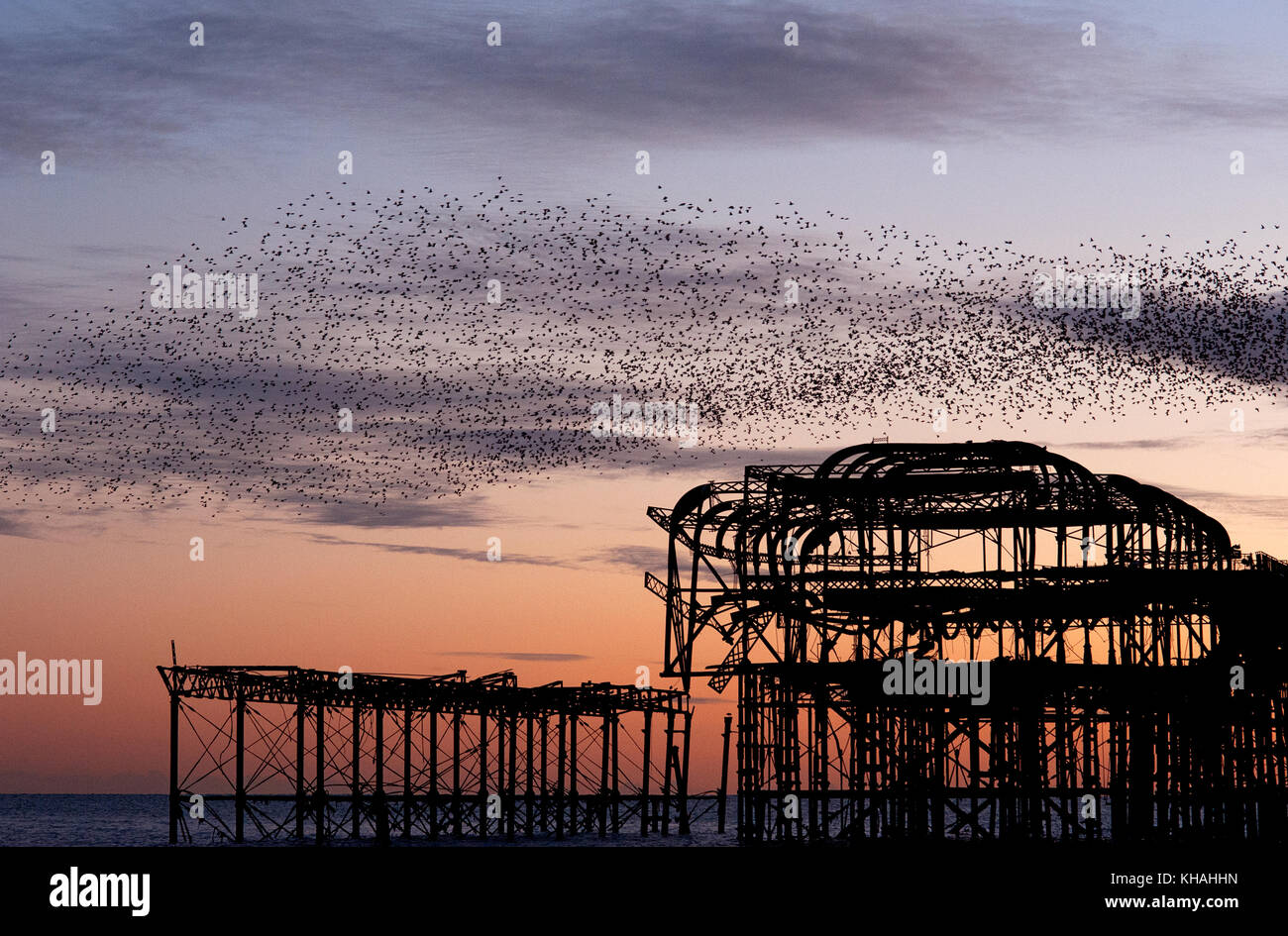 Murmuration over the ruins of Brighton's West Pier on the south coast of England. A flock starlings perform - Stock Image